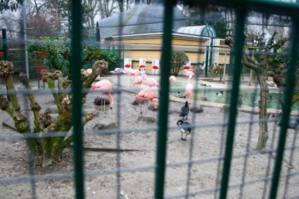 Reaction au depot de plainte contre le Zoo de l'Orangerie (Communique de Presse)